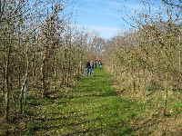 a_Eichenwald_April_2010